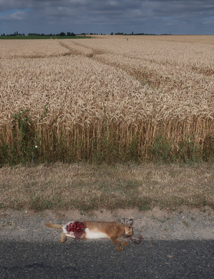 Nature morte (Hargicourt-Paris)